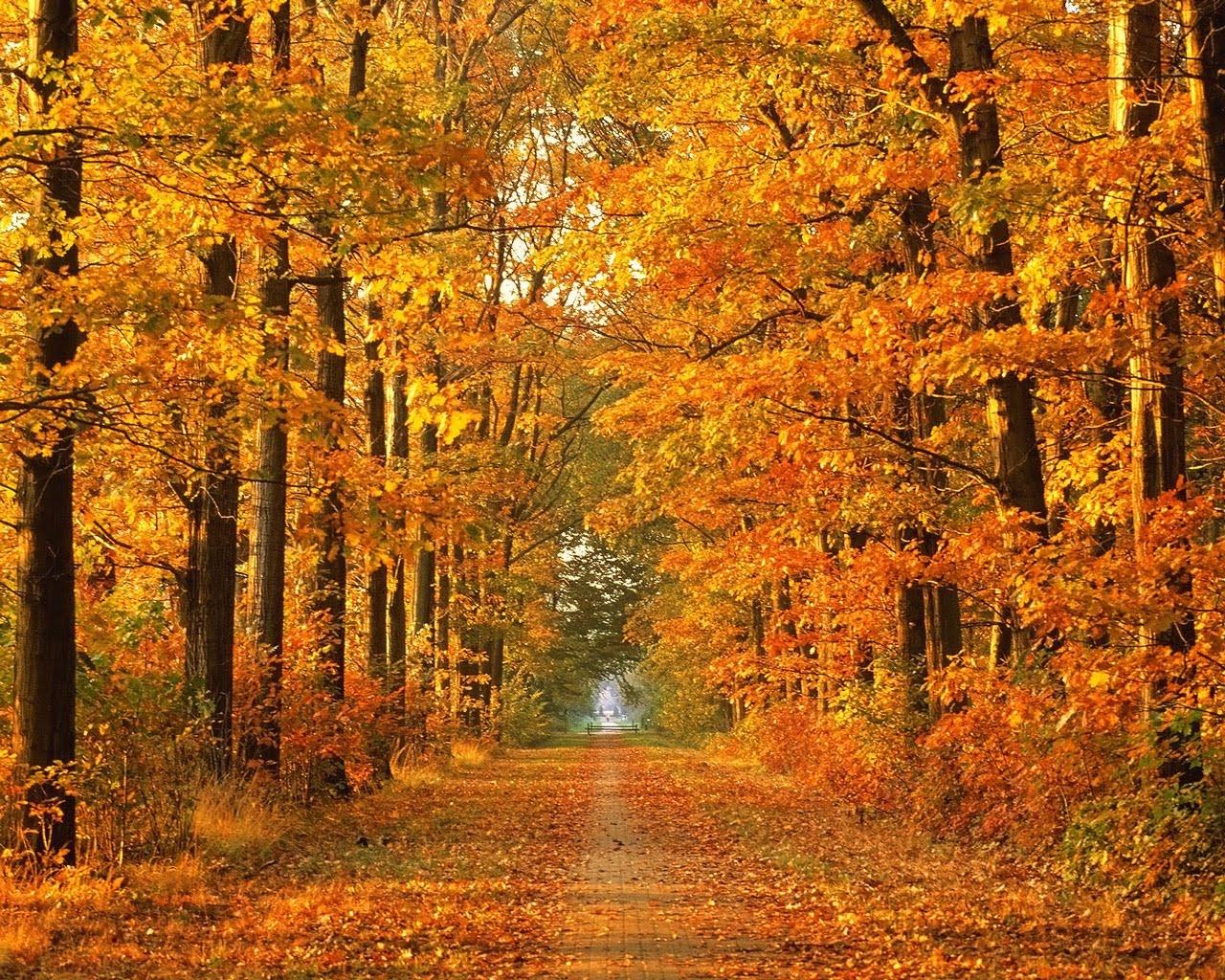 Herbst Bilder Lothars Blog